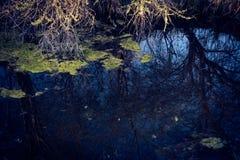 Inondez dans la forêt avec les plantes vertes dans elle et des branches Obscurité, image libre de droits