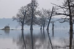 Inondez dans le polje de Lonjsko de parc naturel, Croatie images stock