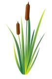 Inondez le marais, le lac et la rivière d'environnement d'herbe de Reed Plant Cattails Green Leaf de l'eau de cannes Page de site Image stock