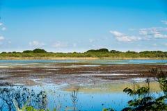 Inondez le paysage dans Puerto Madero, nature et eau photos stock