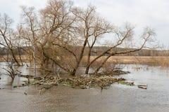 Inondez sur la rivière au printemps pendant les hautes eaux, pile des déchets accumulés dans l'eau photos libres de droits