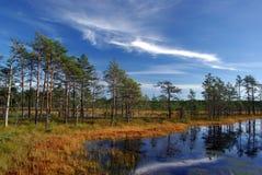 Inondez Viru en nature d'Estonia.The de l'Estonie. Images stock
