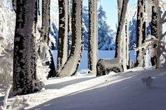 ½ Inovec de skà de ¾ de la Slovaquie PovaÅ avec une vue gentille des environs Images libres de droits
