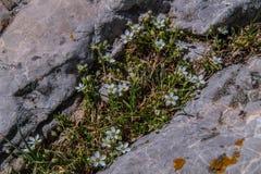 Inqeyras del ceillac di clausis del lago in Hautes-Alpes in Francia Immagine Stock Libera da Diritti