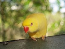 Inqisitive parrot Stock Images