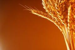 Inquadramento della priorità bassa del frumento Immagini Stock Libere da Diritti