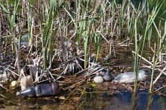 Inquinamento in acqua Fotografia Stock Libera da Diritti