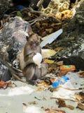 Inquinamento 1/2 del pallone della tenuta della scimmia immagine stock