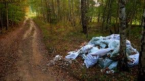 Inquinamento della foresta Immagine Stock