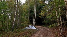 Inquinamento della foresta Fotografie Stock