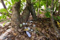 Inquinamento della plastica dei rifiuti fotografia stock