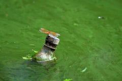 Inquinamento delle acque Fotografie Stock Libere da Diritti