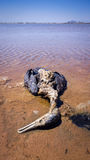 Inquinamento delle acque - fauna selvatica morta Immagine Stock