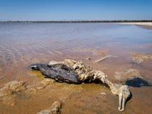 Inquinamento delle acque - fauna selvatica morta Immagini Stock
