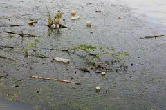 Inquinamento delle acque - immondizia sulla superficie del fiume Immagini Stock