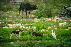 Inquinamento di plastica durante gli animali Fotografia Stock