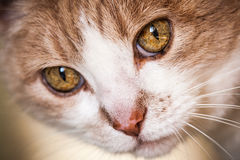 Inquisitive cat face Royalty Free Stock Photography
