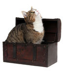 Inquisitive cat in treasury chest Royalty Free Stock Image