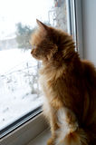 Inquisitive cat on a window. Cat is sitting on a window and looking inquisitively outside in winter Stock Images