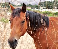 Inquisitive Horse In Paddock Royalty Free Stock Photos