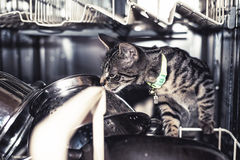 Inquisitive kitty looking inside a dishwasher Royalty Free Stock Photos