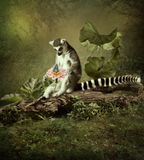 An inquisitive lemur. Sitting on a tree in a forest and looking at a butterfly on a flower Stock Images