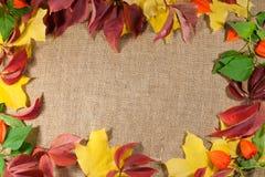 Inrama av mångfärgad foliag för höst royaltyfri bild