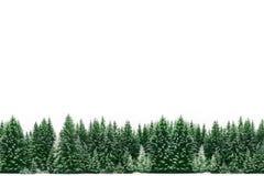 Inrama gränsen av grönt prydligt sörjer trädskogen som täckas av ny snö under vinterjultid Royaltyfri Bild