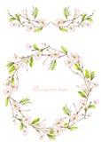 Inrama gränsen, girlanden och kransen av de mjuka rosa blomma blommorna och filialerna med de gröna sidorna som målas i en vatten royaltyfri illustrationer