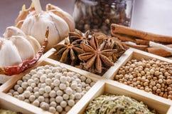 Inramad samling av kryddor Royaltyfri Foto