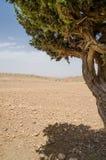 Inramad sikt av det torra trädet för singel i kartbokberg i Marocko, Nordafrika Royaltyfri Fotografi