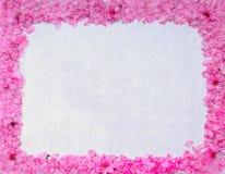 Inramat med persikablomningar och blommor Royaltyfria Bilder