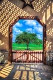 Inramat träd - Fredericksburg Texas Royaltyfria Bilder