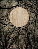 inramnin trä Arkivbilder