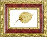 inramning förgylld leafpoplar royaltyfria foton