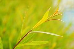 inramning grön horisontal fotoväxt Royaltyfria Bilder