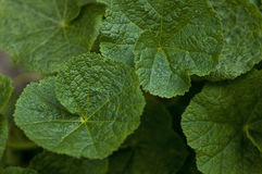 inramning grön horisontal fotoväxt Royaltyfri Bild