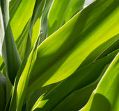 inramning grön horisontal fotoväxt Royaltyfri Foto