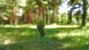 inramning grön horisontal fotoväxt Arkivfoto