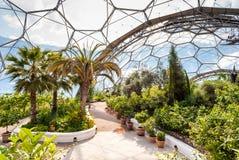 Inre av den medelhavs- biomen, Eden Project royaltyfri fotografi
