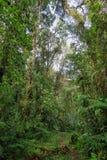 Inre av fuktig mest cloudforest Royaltyfri Foto