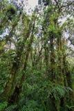 Inre av fuktig mest cloudforest Arkivfoto