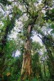 Inre av fuktig mest cloudforest Royaltyfri Fotografi