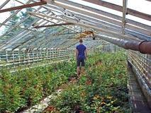Inre glass växthus Arkivfoto