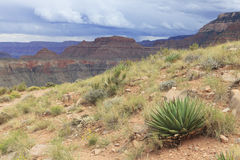 Inre grand Canyon Royaltyfria Bilder