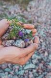 Inre jämviktsbegrepp: mannen räcker innehavstenar med violetta blommor, landbakgrund Jorddag, ecovänskapsmatch Naturtapet royaltyfri foto