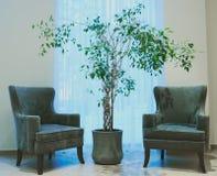 Inre korridorträd och två gröna stolar nära fönstret fotografering för bildbyråer