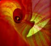inre leaf Royaltyfri Fotografi