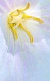 inre makro för blomma arkivbilder