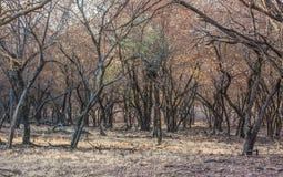 Inre skog Royaltyfria Bilder